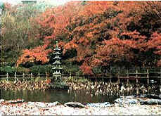 The autumn maples of Emmeiji Templeの画像